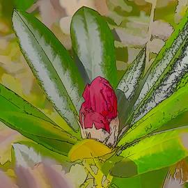 Leif Sohlman - Artistic Red bud September