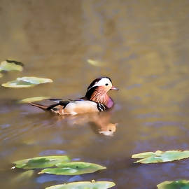 Leif Sohlman - Artistic Reflected Mandarin-duck