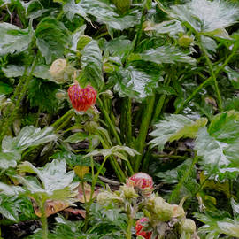 Leif Sohlman - Artistic Strawberries In Rain