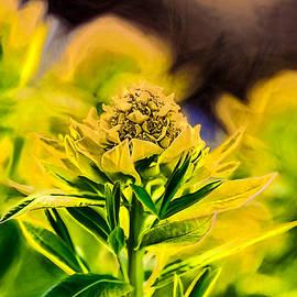 Leif Sohlman - Artistic Yellow May