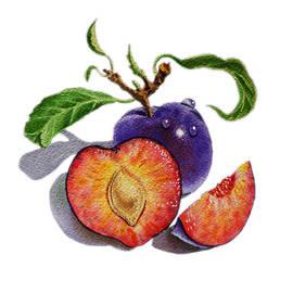 Irina Sztukowski - ArtZ Vitamins The Heart of A Plums