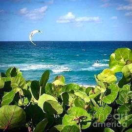 Cindy Nearing - As Free As A Kite