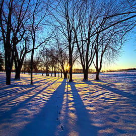 Phil Koch - As the Sun Misses the Flower in the Depths of Winter