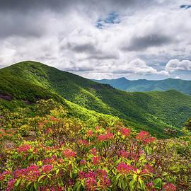 Dave Allen - Asheville NC Blue Ridge Parkway Spring Flowers North Carolina