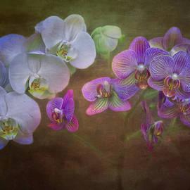 Hal Halli - Asian Orchids