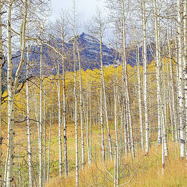 Eric Glaser - Aspen Ambience