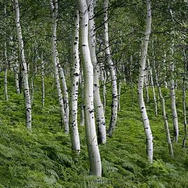 Dori Peers - Aspen Fern Grove