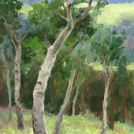 Aspen Grove - Anna Rose Bain