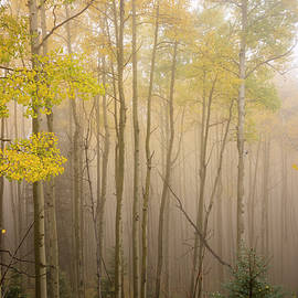 Brian Harig - Aspens In Autumn 10 - Santa Fe National Forest New Mexico