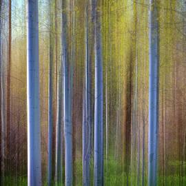 Aspens in Springtime - Rick Berk
