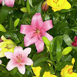 Anthony Totah - Assorted Asiatic Lilies