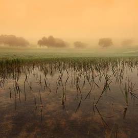 At dawn - Jorge Maia