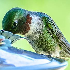 At the Hummingbird Feeder