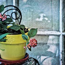Bonnie Bruno - At the Window