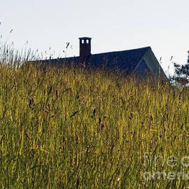 Georgia Sheron - August Grass