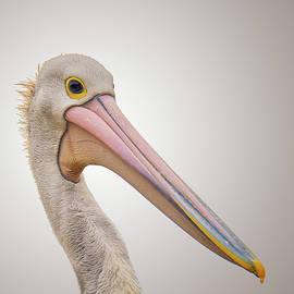 Australian Pelican - Wim Lanclus
