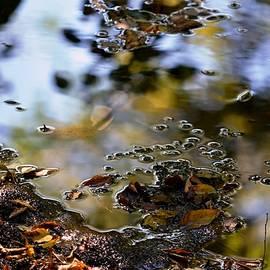 Karen  Majkrzak - Autumn Abstract at Creek