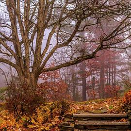 Claudia M Photography - Autumn at my door