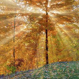 Bill Wakeley - Autumn Beams