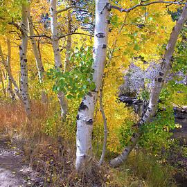 Lynn Bauer - Autumn Beauty at Sherwin Creek