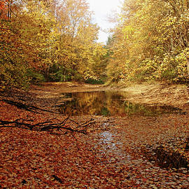 Debbie Oppermann - Autumn Beauty At The Pond