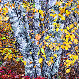 Marty Saccone - Autumn Birch Tapestry