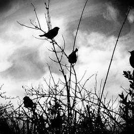 Kathy Franklin - Autumn Birds Silhouette