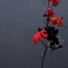 Debbie Oppermann - Autumn Blaze