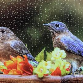 Tina LeCour - Autumn Bluebirds