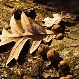 Lori Frisch - Autumn Browns