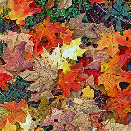 Jean Hall - Autumn Carpet