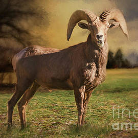 Janice Rae Pariza - Autumn Colorado Ram