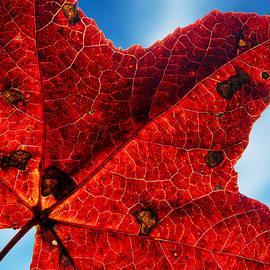 John Bailey - Autumn Colors