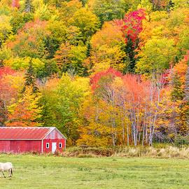 Ken Morris - Autumn Colors Near Lake Ainslie