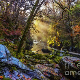 Ian Mitchell - Autumn Fairy Glen