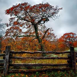 Renee Sullivan - Autumn Fenced In