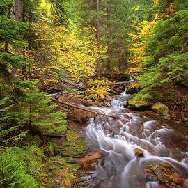 Evgeni Ivanov - Autumn forest