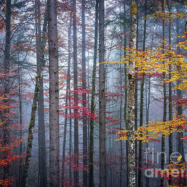 Autumn forest in fog - Elena Elisseeva