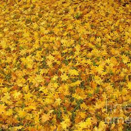 Nancy Worrell - Autumn Gold