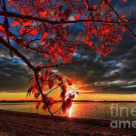 Autumn Illumination - Ian McGregor