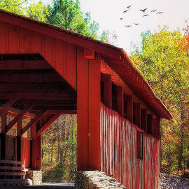 Joan Bertucci - Autumn in Arkansas
