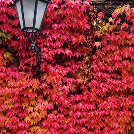 Juan Carlos Ballesteros - Autumn in the city