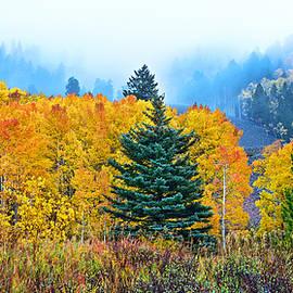 Bijan Pirnia - Autumn In The Mist