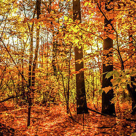 Claudia M Photography - Autumn in the town forest
