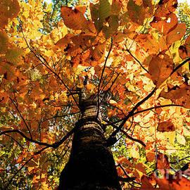 Rebecca Davis - Autumn is Glorious