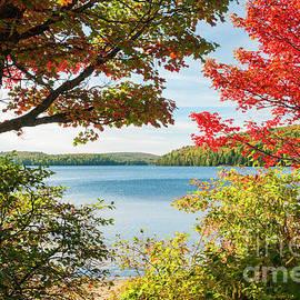 Elena Elisseeva - Autumn lake