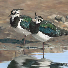 Clive Meredith - Autumn Lapwings
