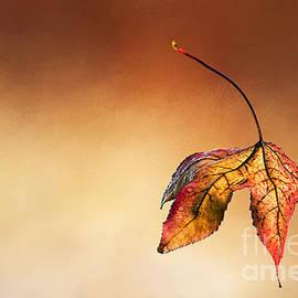 Kaye Menner - Autumn Leaf Fallen