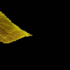 Eena Bo - Autumn Leaf