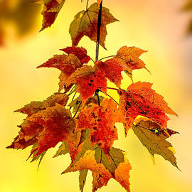 Marty Saccone - Autumn Leaves
